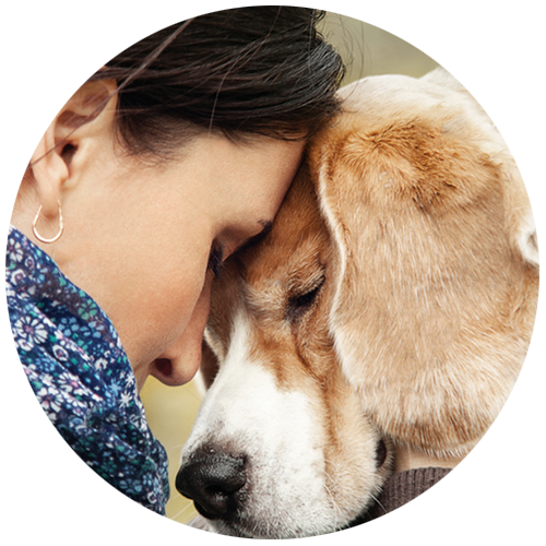 Servicio de eutanasia para mascotas