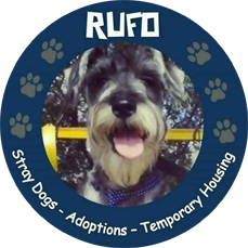 Logo Fundacion Rufo